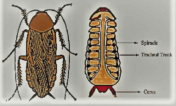 cockroach-means-in-hindi